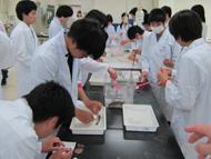 生物実習-(1)
